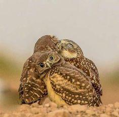 Hey! Why'd ya wake me up?