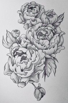 Peonie tattoo design in black pencil, drawn in August 2015, being applied in late January 2016