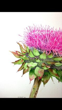 """Pink Thistle is a 5x7 glossy Greeting Card that is a reproduction of a watercolor painting by Texas Hill Country artist Nan Henke. """"These thistles are considered weeds and a menace to local agriculture, so I have to love them quietly. But love them, I do, especially when they take over an entire field with their vibrant pink bobbing heads...""""   Shop this product here: http://spreesy.com/nanhenke/1   Shop all of our products at http://spreesy.com/nanhenke   Pinterest selling powered by…"""