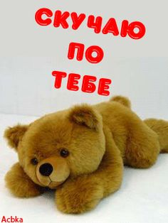 I Miss You, Teddy Bear, Funny, Cards, Animals, Cute Things, Pictures, Animales, Animaux