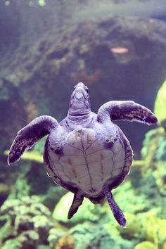 Turtle!!!