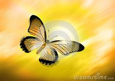 Yellow Butterfly Flying - Download From Over 34 Million High Quality Stock Photos, Images, Vectors. Sign up for FREE today. Image: 25149314