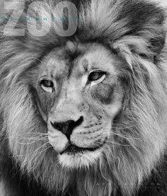 Leo Police, Tree Branches, Lion, Art Pieces, Creatures, Drawings, Animals, Leo, Animales