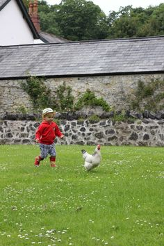 chasing chickens.. When I was a kid, this activity was a tried and true method for curing boredom. Until my grandmother threatened us with a switch...