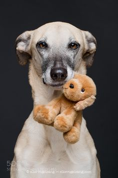 """tinnacriss: """" A dog is for life by Wieselblitz """""""