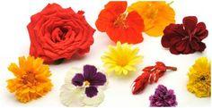 Diverse eetbare bloemen met verschillende smaken