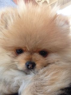 My first day home!!!! Pom