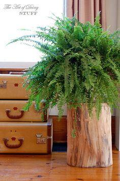 Tree wood diy stump table ideas for 2019 Tree Stump Table, Tree Stumps, Wood Stumps, Tree Trunks, Trendy Tree, Deco Design, Plant Decor, Indoor Plants, Indoor Gardening