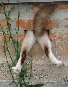Funny Animal Pictures - View our collection of cute and funny pet videos and pics. New funny animal pictures and videos submitted daily. Happy Animals, Funny Animals, Cute Animals, Crazy Cat Lady, Crazy Cats, Dog Fails, Tier Fotos, Cute Creatures, Funny Animal Pictures