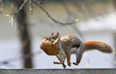 cute-squirrel-photography-72__700