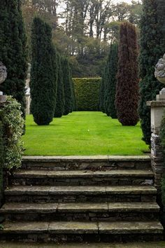 Yew Trees - English Gardens - Design & Landscaping Ideas (houseandgarden.co.uk)