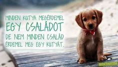 Dog Quotes, Wall Sticker, Pets, Animals, Bedroom, Animal Pictures, Animales, Animaux, Quotes For Dogs