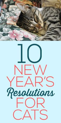 10 New Years Resolutions For Cats