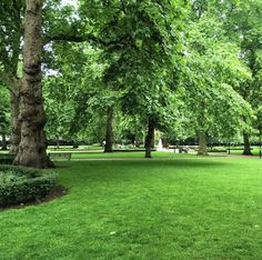 #RussellSquare En route to hosting a #THATMuse at the #britishmuseum. #London Couldn't get prettier than this carpet of GREEN! #museumfun #thelondonlifeinc #thelondonist #repeatclients #igerslondon #londonparks #londongreen #kidsandart #kidsinlondon #londonwithkids