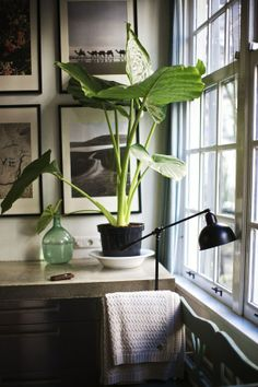 black and white photos with a house plant in a window for a modern #bungalow look