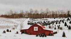 Red Barn Tree Farm — Linville Falls Winery #barnpros #barns #barn #prefabbarns #barnhomes #barnkits #barnswithapartments #barnbuilding #barnhouses #barnkit Prefab Barns, Linville Falls, Barn Kits, Christmas Tree Farm, Farms, Building, Red, Outdoor, Outdoors