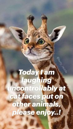 Today I am laughing uncontrollably at cat faces put on other animals, please enjoy..!