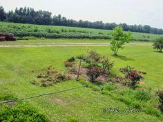 Hibiscus House: Behind the Scenes Gardening