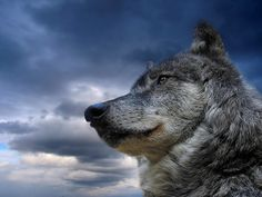 Pictures of animals | Free images of animals for kids