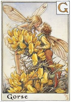 Illustration for the Gorse Fairies from Flower Fairies of the Alphabet. A girl fairy leans over a spray of gorse from the left to kiss a boy fairy who stands on tiptoe on the right.    Author / Illustrator  Cicely Mary Barker