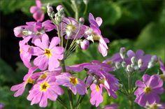 Gartenblüten im April - Jahreszeiten - Galerie - Community