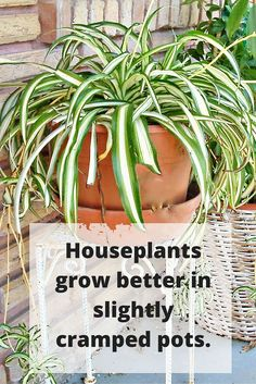 Cramped Quarters for Houseplants