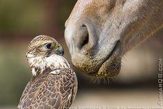 10 beeindruckende Vogelbilder » Flickr, Vogelbilder, Situation, Streifzügen, FotoDie, Wenn » Roman Harcke