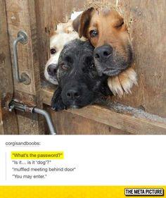 Please Say The Password