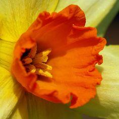 Narcissus center