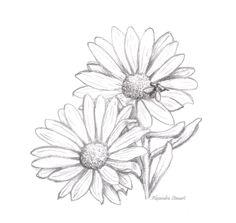 31 Ideas For Flowers Drawing Pencil Daisy Daisy Flower Drawing, Flower Drawing Tumblr, Flower Sketches, Flower Art, Flower Drawings, Flower Sketch Pencil, Tumblr Sketches, Tumblr Drawings, Pencil Drawings