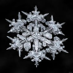 I love these snowflakes. Broad branches, balance, and a change in growth pattern…