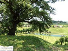 Tour, travel, tours in Treviso - Tourism Prosecco