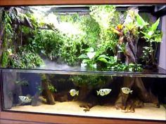 300g paludarium - DIY tank with open upper portion  I think I might have just discovered the coolest thing ever.