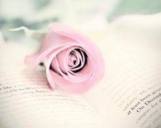 Rose on Book, Nursery Deco, Flower and Book Photography by MYDinga Rose Bouquet, Book Photography, Photo Studio, My Photos, Logo Design, Nursery, Deco, Amazing, Creative