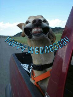 Happy Wednesday good morning wednesday happy wednesday good morning wednesday wednesday image quotes wednesday quotes and sayings Funny Wednesday Memes, Wednesday Morning Quotes, Wednesday Hump Day, Hump Day Humor, Wacky Wednesday, Morning Memes, Good Morning Quotes, Afternoon Quotes, Good Morning Sister
