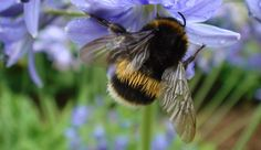 Bumblebee, from Mercx Design