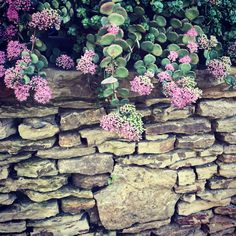 Sedum is the perfect accent to this stone porch.   Carters Nursery, Pond & Patio   Jackson, Tennessee Stone Porches, Stone Masonry, Outdoor Kitchens, Fireplaces, Stepping Stones, Tennessee, Pond, Jackson, Nursery