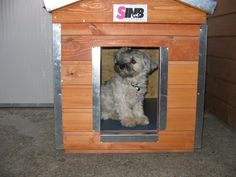 Dog Houses, Dogs, Animals, Animales, Animaux, Pet Dogs, Dog Kennels, Doggies, Animal