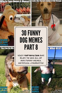 See Priceless New Photos Of Adorable Dogs Like Labradors, Retrievers & Schnoodles & See What They're Really Thinking With Our State Of The Art Brain Reading Equipment, Only @ TufToys.com :) Funny Dog Memes, Funny Dogs, Cute Dogs, Dog Lover Gifts, Dog Lovers, Animal Memes, Funny Animals, Funny Share, Durable Dog Toys