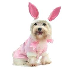 Easter Dresses and Costumes for Dogs