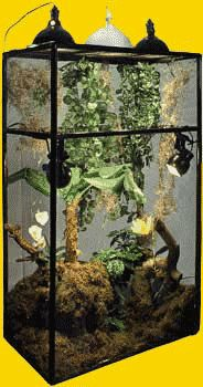 Enclosures Chameleon Enclosure, Bob Hope, Reptile Cage, Cleaning, Home Cleaning