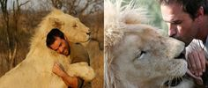 What Happens When You Attempt To Hug A Lion? The Result Was Very Unexpected ... - PHUNRISE
