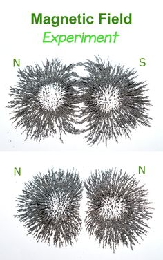 Magnetic Field Science Experiment for Kids - using iron filings.