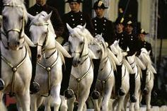 """Lipizzaner Stallions - """" The Spanish Riding School in Vienna is the only institution in the world which has practiced for over 440 years and continues to cultivate classical equitation in the. Lippizaner, Spanish Riding School Vienna, Horse Riding School, Lipizzan, Types Of Horses, Andalusian Horse, Horse World, White Horses, Horse Pictures"""