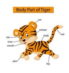 Diagram showing body part tiger vector Learning English For Kids, English Lessons For Kids, English Fun, Learn English, Kids Learning, English Class, English Picture Dictionary, Dictionary For Kids, Infant Activities