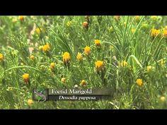 Prairie Dogs: Keystone species - YouTube