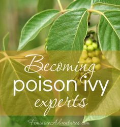 """Nothing can ruin a great day outside like accidentally getting into a patch of poison ivy. Join me in becoming a """"poison ivy expert""""!"""