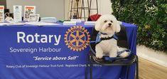 Rotary Club, Trust Fund, Dogs, Animals, Animaux, Doggies, Animal, Animales, Pet Dogs