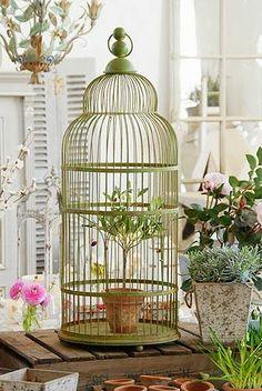 Shabby en el amor: Ideas interesantes para mostrar las jaulas de pájaros