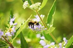 Bee At Work, Nature, Flowers by dg. seaton on @creativemarket
